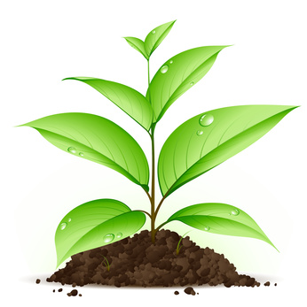 Vers un développement des obligations vertes ?